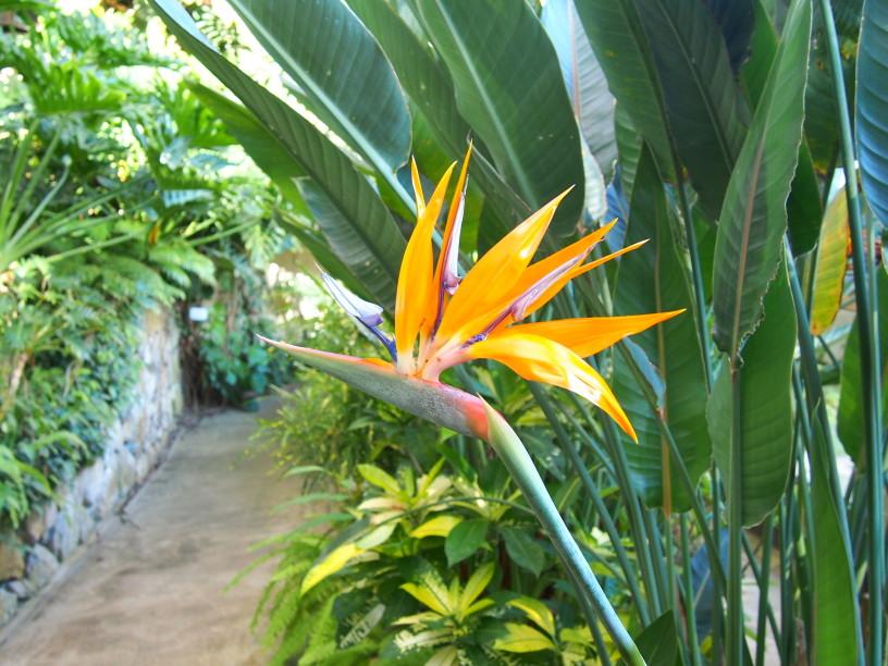 熱帯植物花散歩